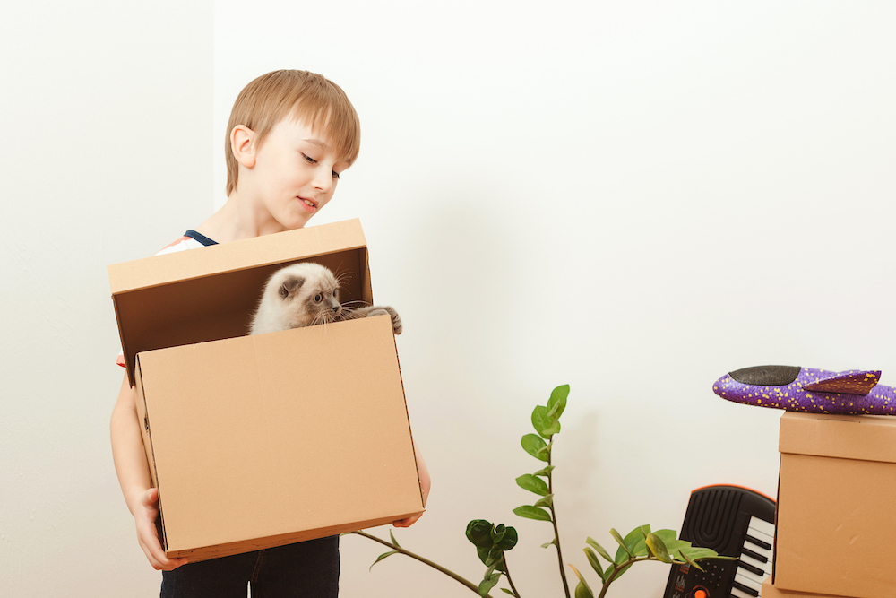 consigli su come far vivere al meglio il trasloco al tuo gatto