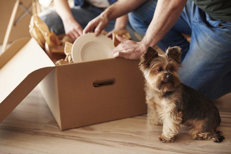 traslocare con gli animali domestici, consigli pratici